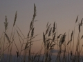 pendower-beach-sunset-slider